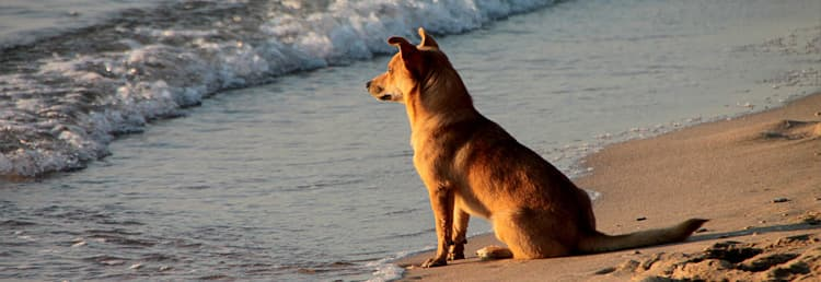Ontspannen met uw hond op het strand in Ligurië