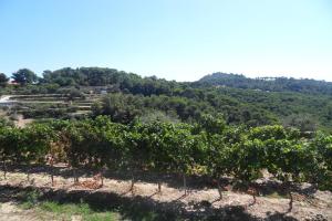 Cascina Praié Wijnboeren in Ligurië