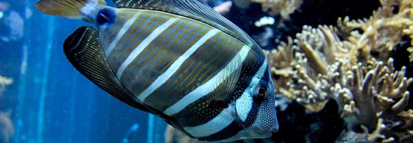 Een mooie vis in het aquarium van Genua