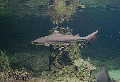 Het op een na grootste aquarium in Europa in Genua is een bezoek waard