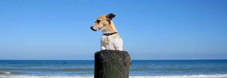 Hondvriendelijke vakantiewoningen in Ligurië