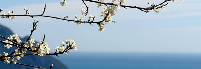Spring in Liguria, Italy