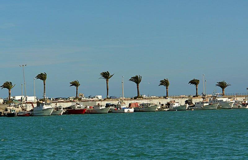 Palmbomen in de wind in een haven van Imperia