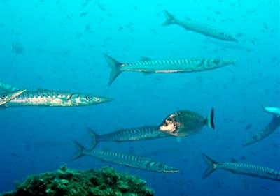 Vissen zwemmen onder water in Ligurië