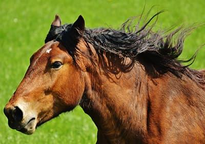 Een mooi paard in Ligurië
