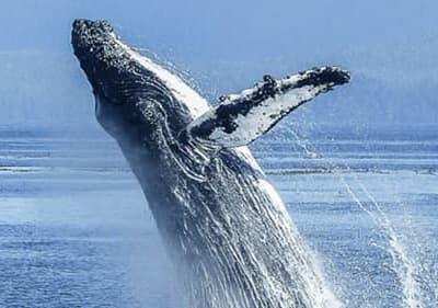 Walvissen en dolfijnen bekijken