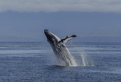 Walvissen en dolfijnen zien en geniet van deze unieke belevenis in Ligurië