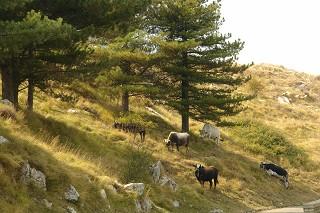 zoogdieren in Ligurië