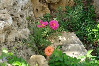 bloemen in Ligurië