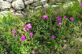 mooie flora in Ligurië