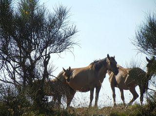 paarden in Ligurië