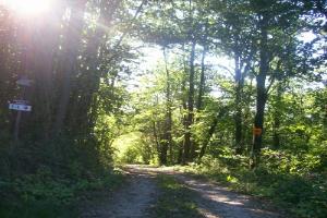 Parco Naturale Regionale di Bric Tana Wandeling in Ligurië