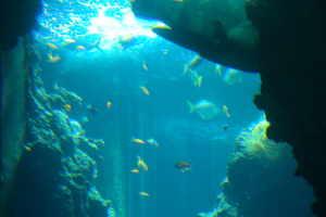 Centro Immersioni Delfino Duikcentra in Ligurië