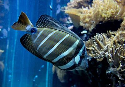 Vissen in Aquarium van Genua, Ligurië