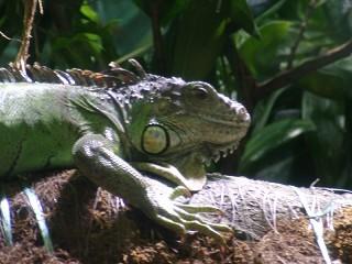 reptielen in Ligurië