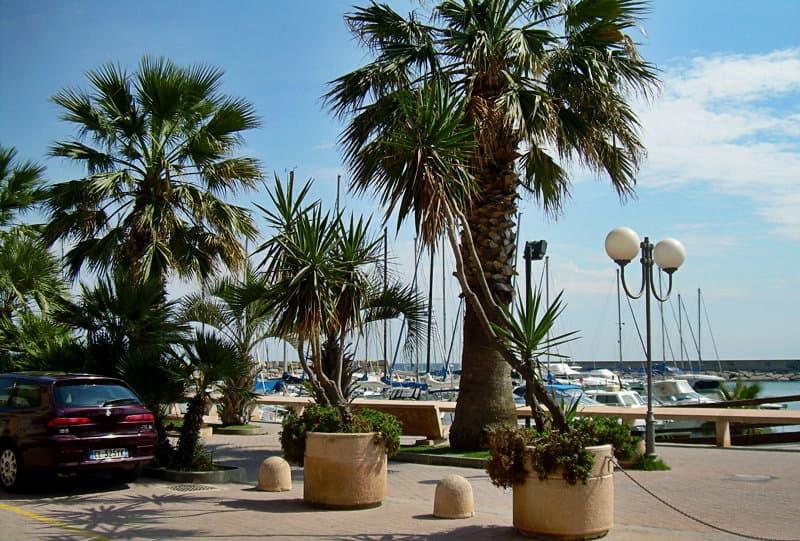 Palmbomen naast een haven in San Bartolomeo al Mare