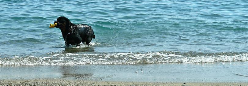 Hond stranden in Ligurië