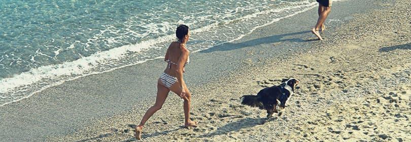 De eigenaar speelt met haar hond in Albisola