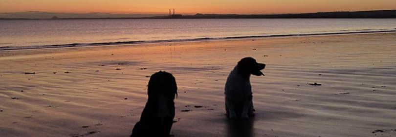 Twee honden op het strand in Ligurië