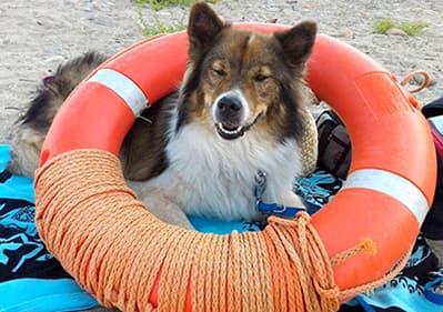 Een hond is op het strand in Ligurië