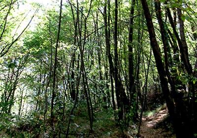 Een bos in Ligurië